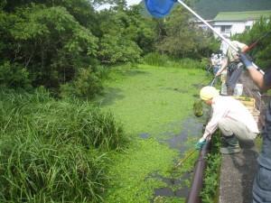 森の貴重な植物を守るため、ボランティアの人たちと外来植物を駆除しています